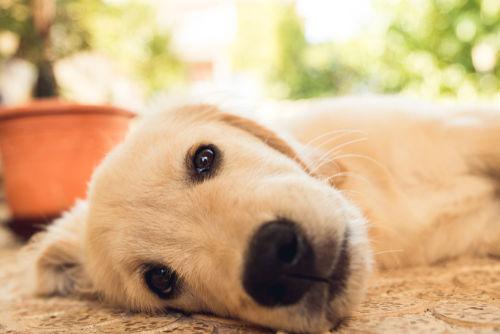 犬の脊椎奇形(せきずいきけい)