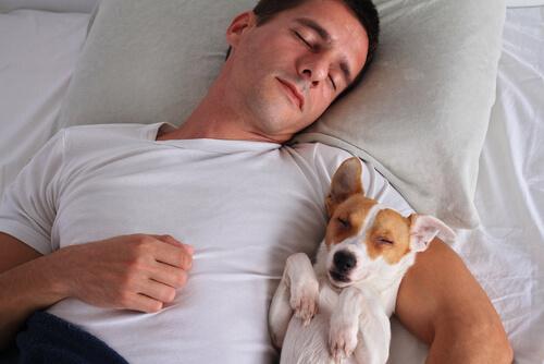 なぜ、自分のベッドで寝ないのか?愛犬が飼い主と一緒に寝ようとする理由とその問題点