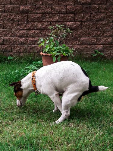 【獣医師監修】犬が便秘になった。この症状から考えられる原因や病気は?