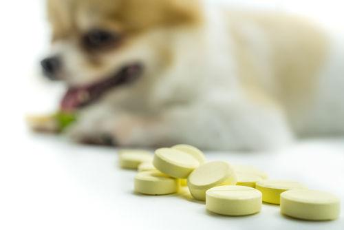 犬の細菌性膀胱炎の治療