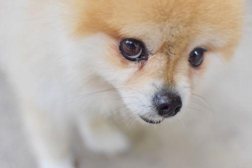 犬の細菌性膀胱炎【予防対策】