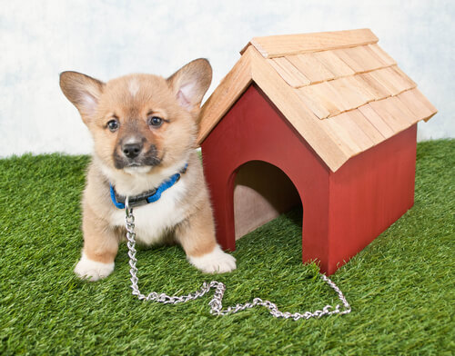 ベッドで糞や尿をしないために。上手な排泄を覚えさせる効果的な犬のしつけ方法