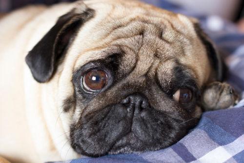 犬のリンパ腫【症状】
