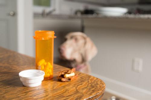犬のリンパ腫【治療方法】