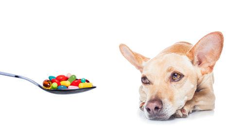犬のリンパ腫の治療薬