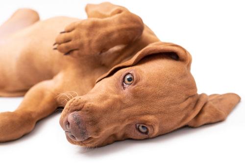 犬の慢性腸炎(まんせいちょうえん)