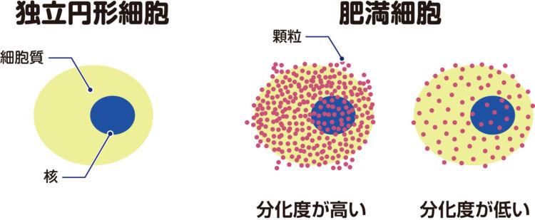 犬の肥満細胞腫のタイプを表す組織学的グレード