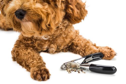犬が爪切りを嫌がる!犬の嫌がらない3つの爪切り方法(タイプ別)