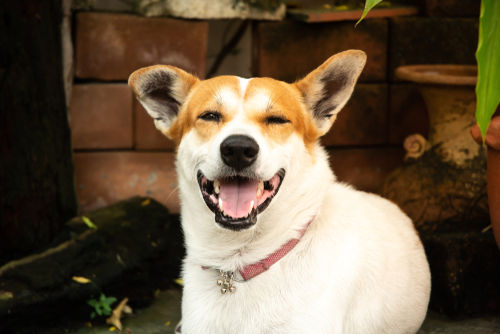 犬のぶどう膜炎【症状】
