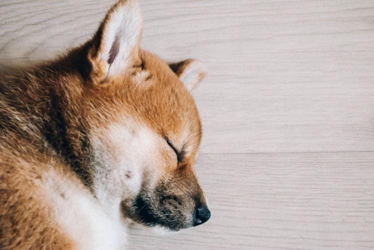 【獣医師監修】犬の皮膚に膿(うみ)がある。この症状から考えられる原因や病気は?