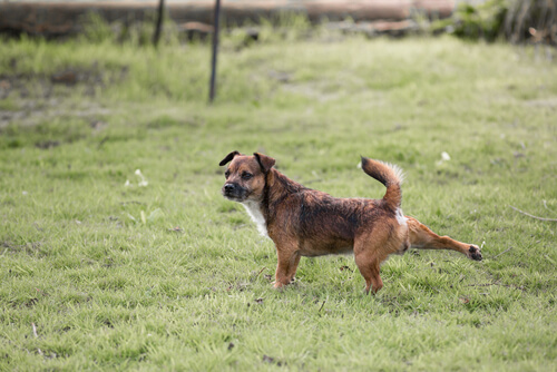 知ってびっくり!犬がトイレの後に後ろ足で地面を蹴る意外な理由