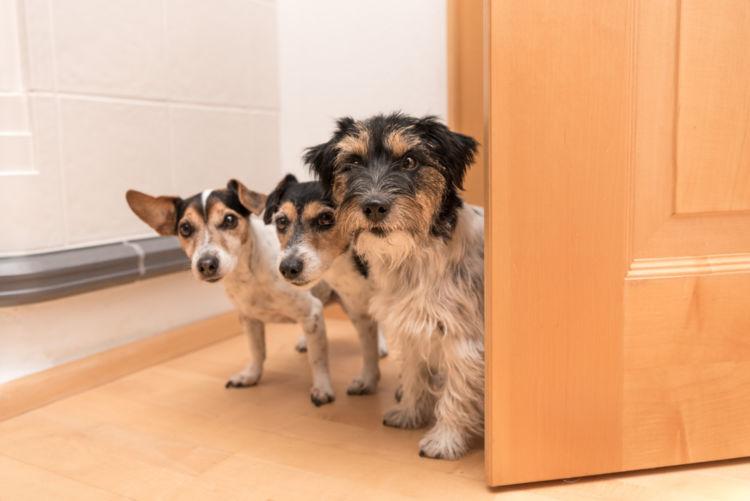 犬の舌炎【診断方法】