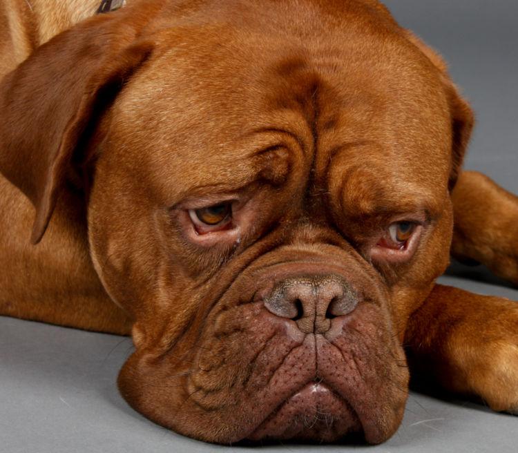 犬の舌炎と間違えやすい病気
