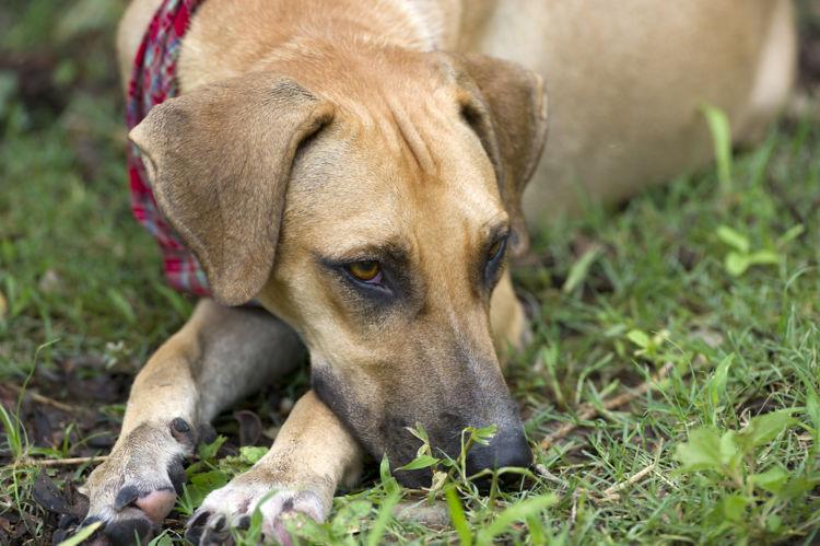 犬の舌炎【予防対策】