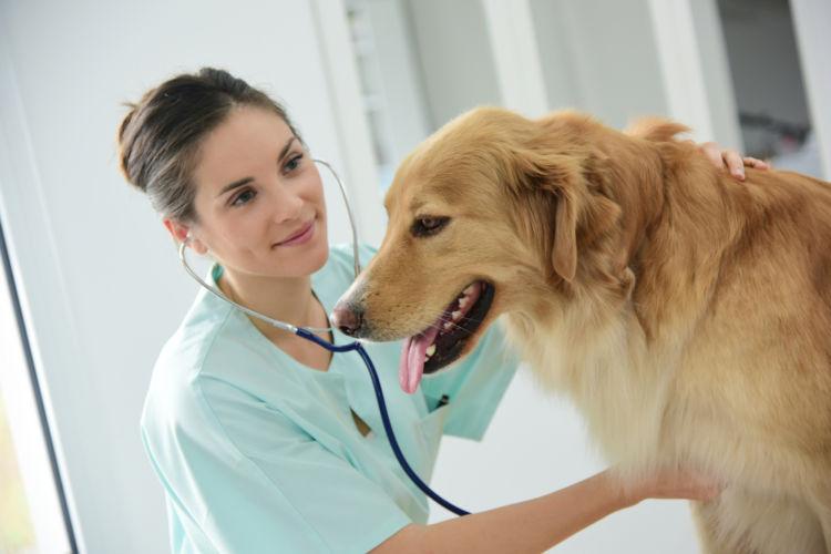 犬の消化器型リンパ腫【診断方法】