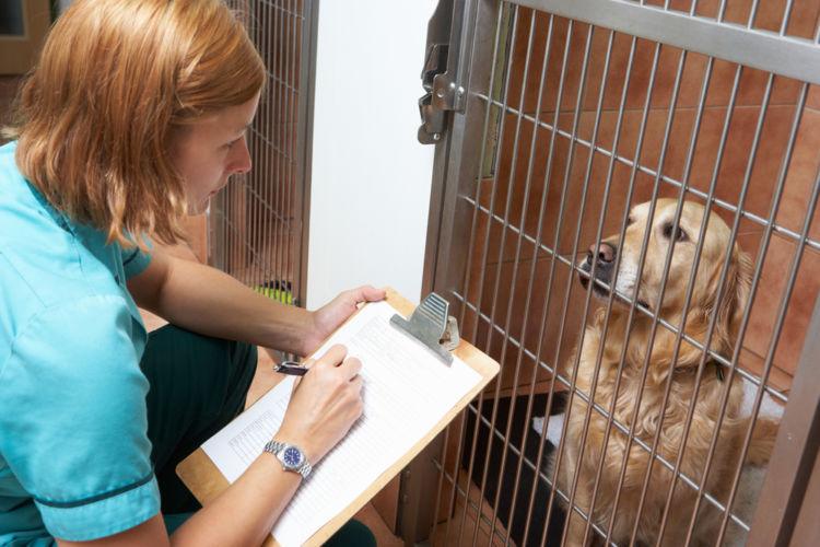 犬の消化器型リンパ腫【治療方法】