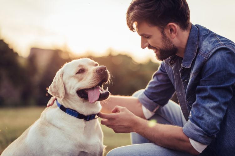 犬の消化器型リンパ腫【予防対策】