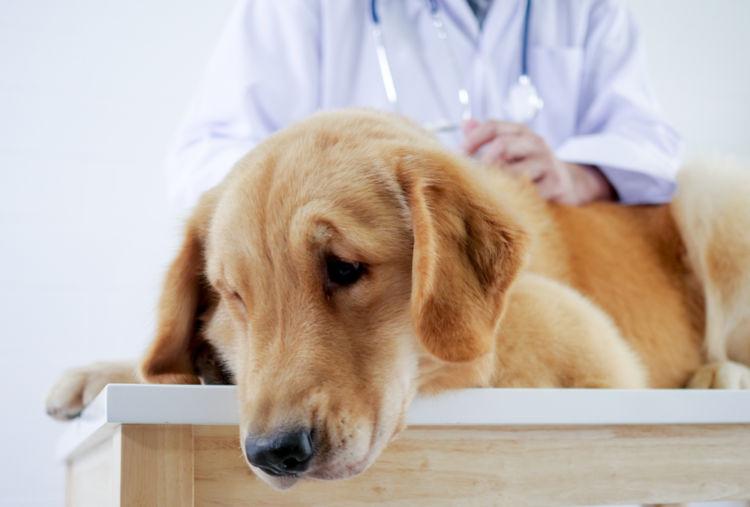 犬の消化器型リンパ腫と間違えやすい病気