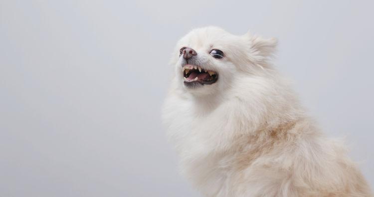 【獣医師監修】「犬の口内炎」原因や症状、なりやすい犬種、治療方法は?