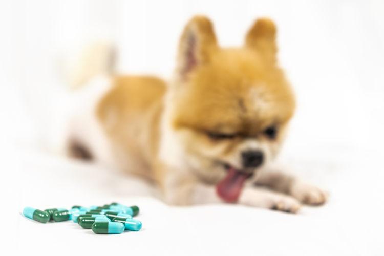 犬の口内炎【治療方法】