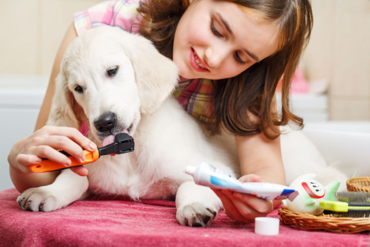 犬の口内炎【予防対策】