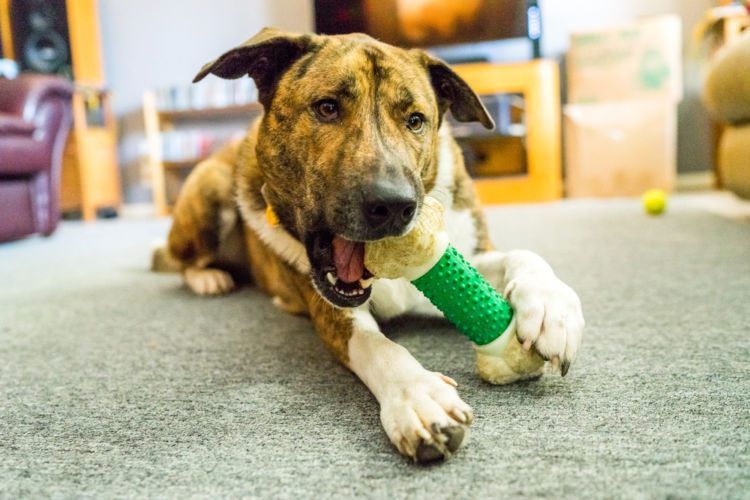 犬の歯肉炎と間違えやすい病気