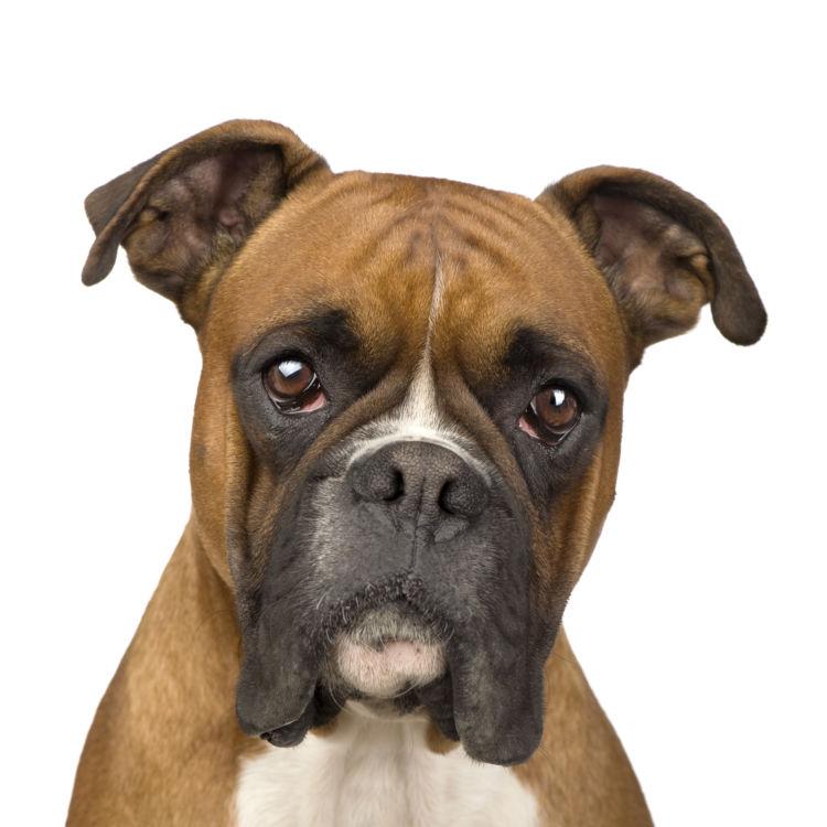 犬の口唇炎【症状】