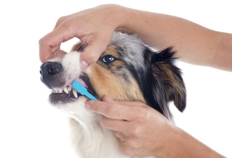 犬の口唇炎【予防対策】