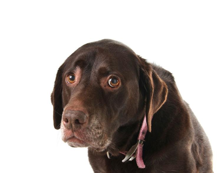 犬のフケが多い【考えられる原因】