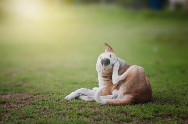 犬のフケが多い【こんな場合は要注意!】