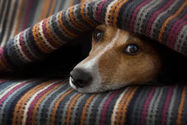 犬の皮膚が赤い・皮膚がただれている【こんな場合は要注意!】