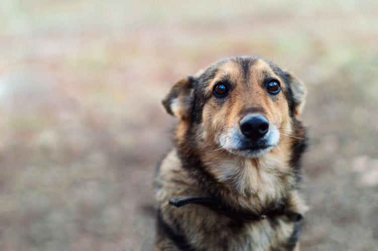 犬の皮膚が赤い・皮膚がただれている【この症状で考えられるおもな病気】