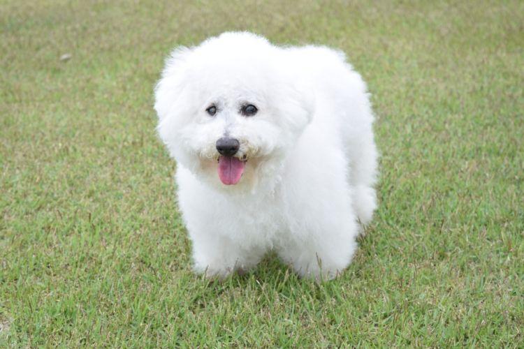 犬の白内障の原因