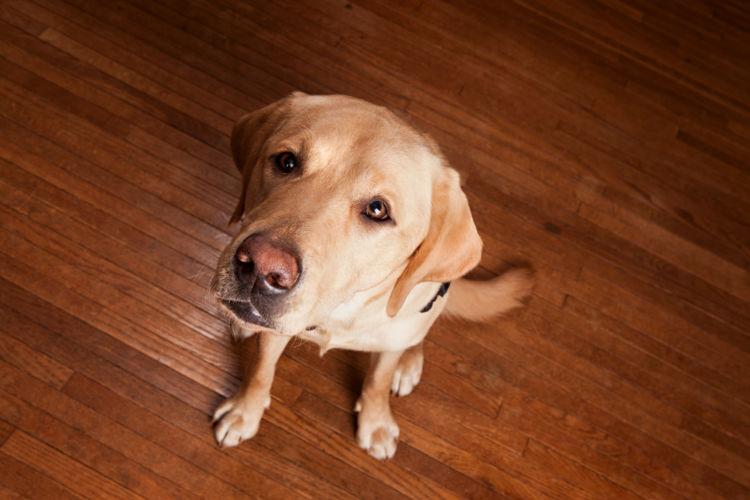 【獣医師監修】犬の眼振(がんしん)・目が揺れている。この症状から考えられる原因や病気は?