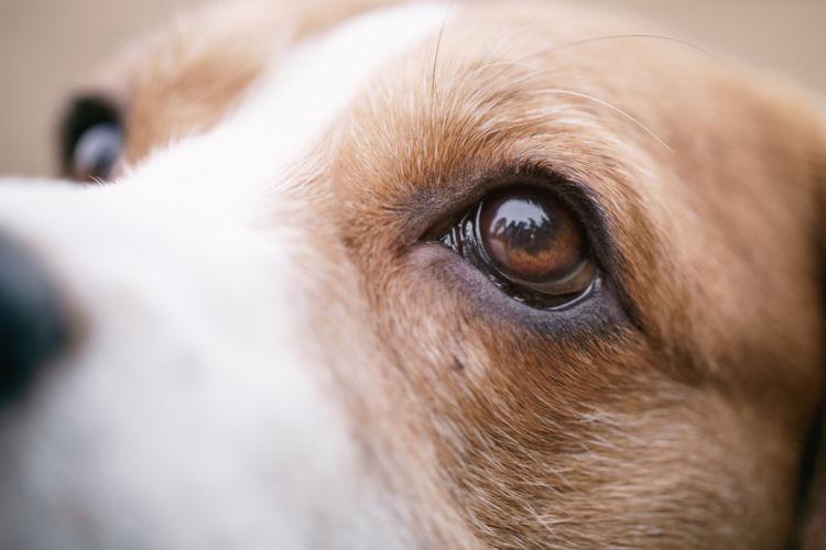 犬の眼振・目が揺れている【こんな症状は要注意!】