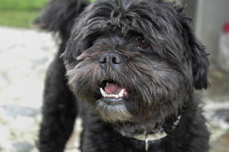 犬の眼振(がんしん)・目が揺れている【この症状で考えられるおもな病気】