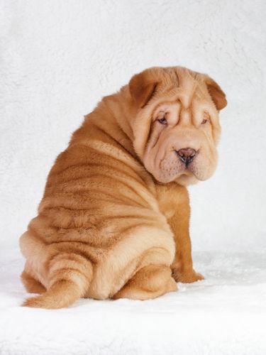 犬の毛包虫症(もうほうちゅうしょう)