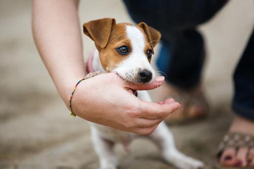 犬がかむのをやめさせたい!かみ癖を上手に直せる4つのしつけ方