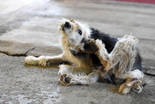 注意すべき犬の脱毛