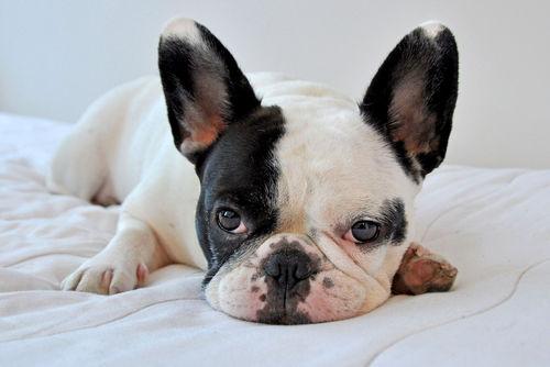 犬の皮膚に黒い斑点がある【考えられる原因】