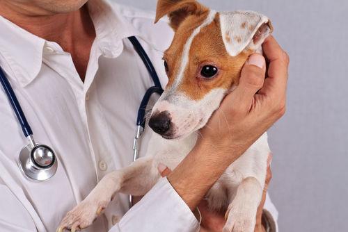 犬の皮膚に黒い斑点がある【こんな場合は要注意!】