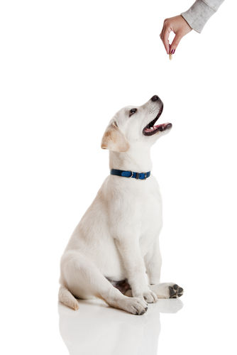愛犬にさつまいもを与えるメリットは?