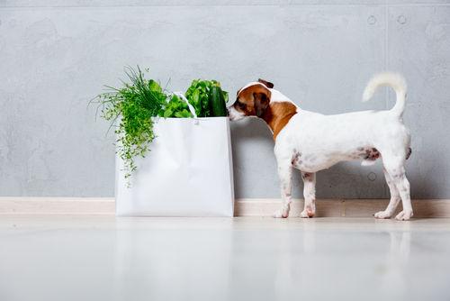 そもそも犬に野菜って必要?どれくらい食べていいの?