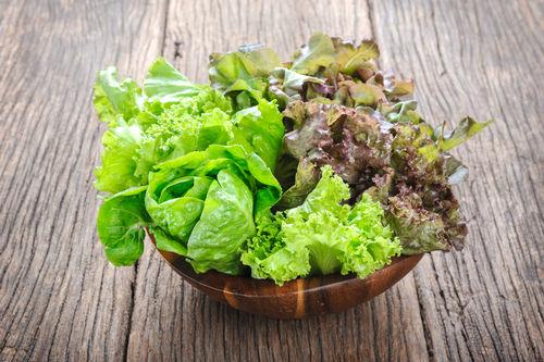 食べて大丈夫な野菜⑩【レタス】