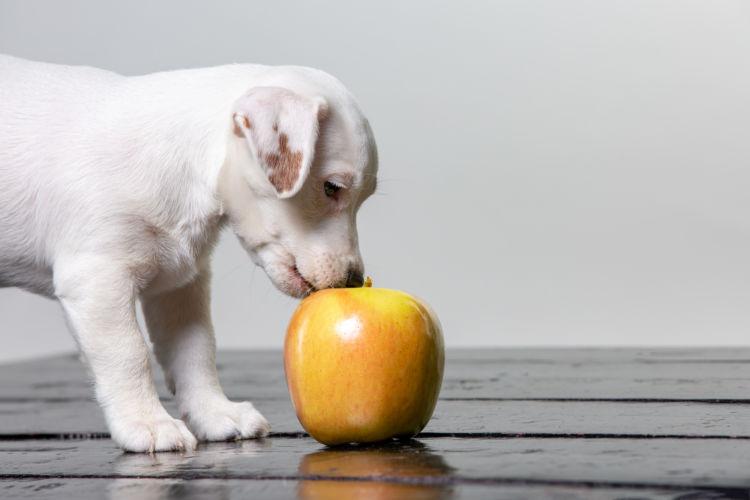 愛犬にりんごを与える際の注意点!