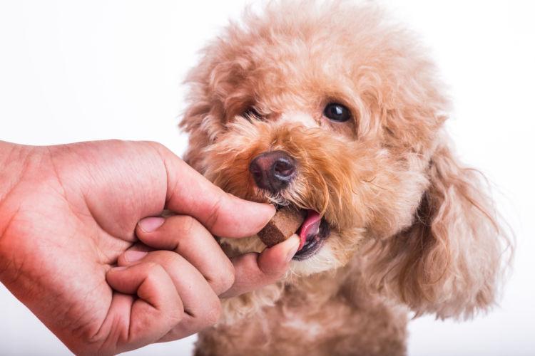 りんごを与える際の注意点② 犬が「薬」を飲んでいる時
