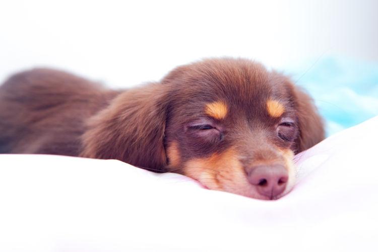 りんごを与える際の注意点③ 犬の「消化能力」が落ちている時
