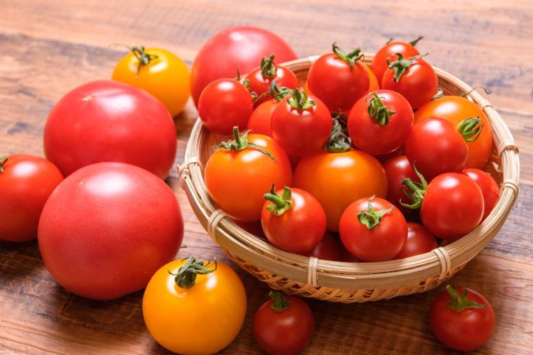 【獣医師監修】犬がトマトを食べても大丈夫?トマチン中毒(花・葉・茎)に要注意!