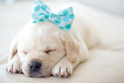 【獣医師監修】犬が一日中よく寝てばかりいる理由は?老犬が寝てばかりなのは病気かも!?