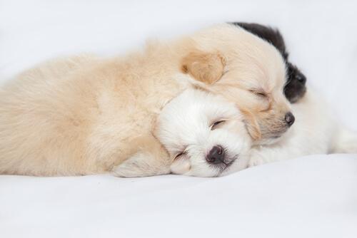 獣医師監修 犬が一日中よく寝てばかりいる理由は 老犬が寝てばかり